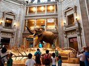 Smithsonian Museums - Smithsonian National Museum of Natural History - Washington, DC