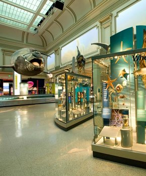 Sant Ocean Hall, Smithsonian Museum of Natural History - Washington, DC