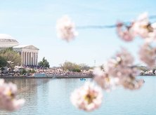 @dougvansant - National Cherry Blossom Festival Petalpalooza fireworks at the Wharf - Spring festival and fireworks in Washington, DC