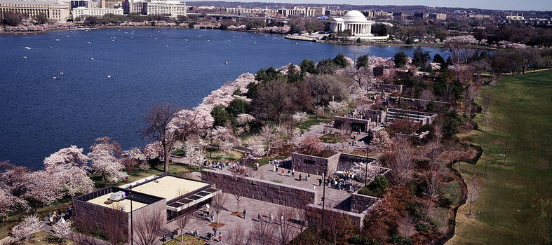 Where can you see the cherry blossoms?