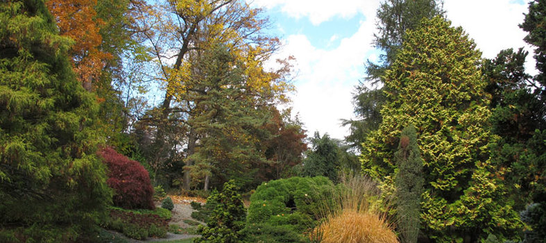 Explore the Gotelli Conifer Collection at the U.S. National Arboretum