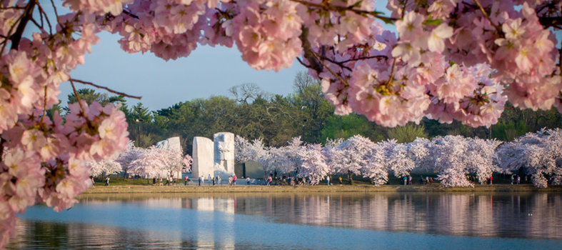 Experience the sights on the National Mall