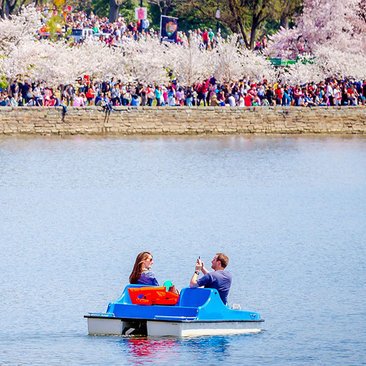 Events and Festivals, Things to Do in Washington, DC