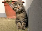 Cute kitten next to a wall with a planter behind him