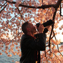 Where to Photograph the Cherry Blossoms in Washington, DC